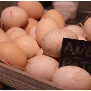 Huevo de Pato